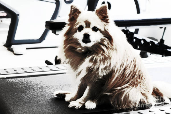 Wall Art - Photograph - Doggie No Need For Treadmill by Charline Xia