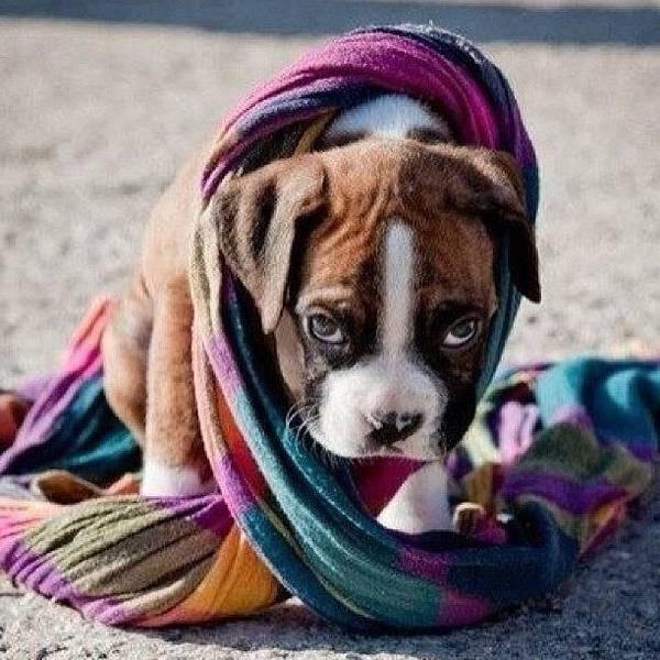 Wall Art - Photograph - #dogs #colors #puppy by Marina Boitmane
