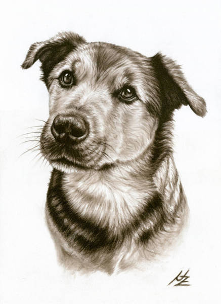 Chien Drawing - Dogs Eyes by Nicole Zeug