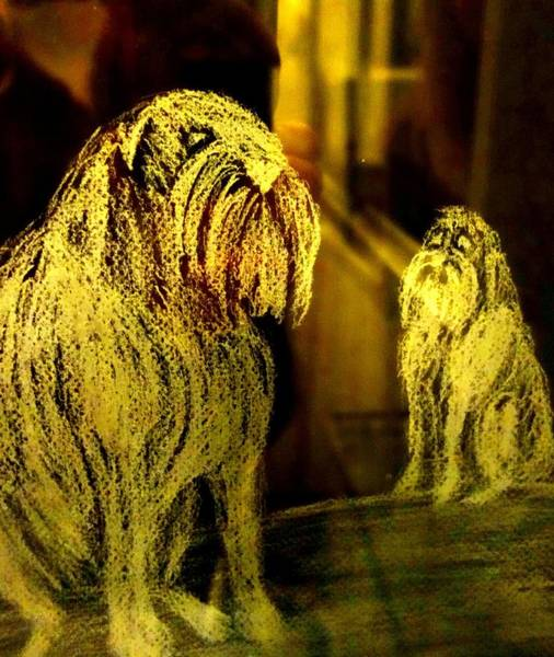 Developed Drawing - my dogs in heaven still guard me, even though I might not deserve it  by Hilde Widerberg