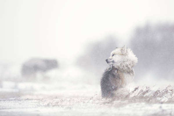 Misty Photograph - Dogs In The Storm by Marco Pozzi