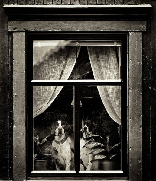 Summer Fun Wall Art - Photograph - Dogs by Julien Oncete