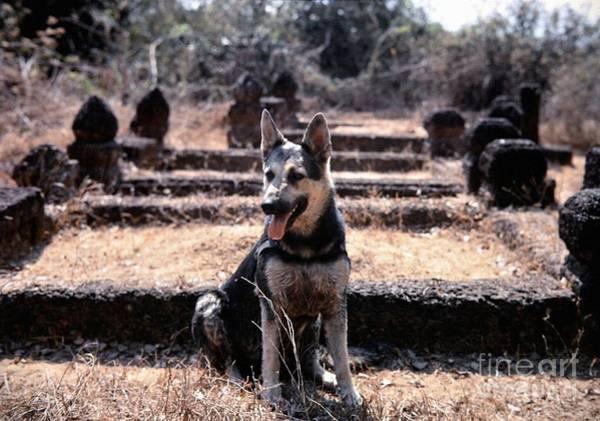 Photograph - Dogs Of War by Mel Steinhauer
