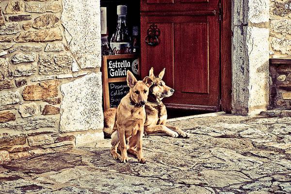Galicia Photograph - Dogs by Aurelio Bello