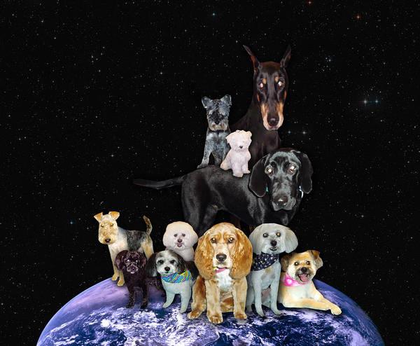 Maltipoo Wall Art - Photograph - Dogs Rule by Jennifer Schwab