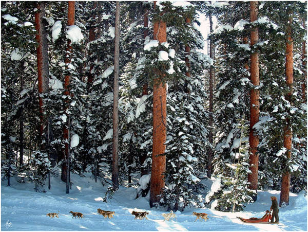 Photograph - Dogsled In Douglas Fir  by Wayne King