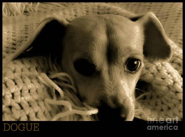 Dog Biscuit Photograph - Dogue by Angela J Wright