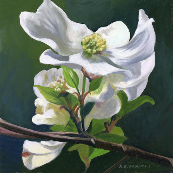 Dogwood Painting - Dogwood Blossom by Alecia Underhill