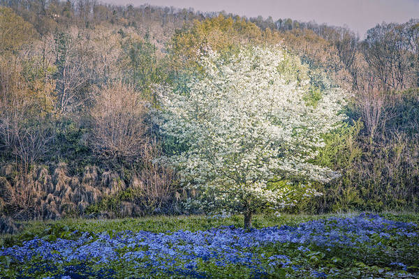 Backroad Wall Art - Photograph - Dogwood Blues by Debra and Dave Vanderlaan