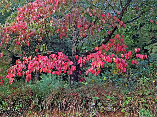 Photograph - Dogwood Leaves In The Fall by Duane McCullough