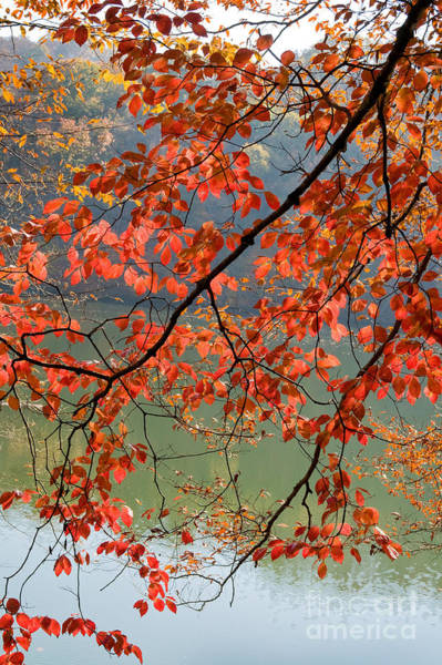 Photograph - Dogwood Tree by Kenneth Murray
