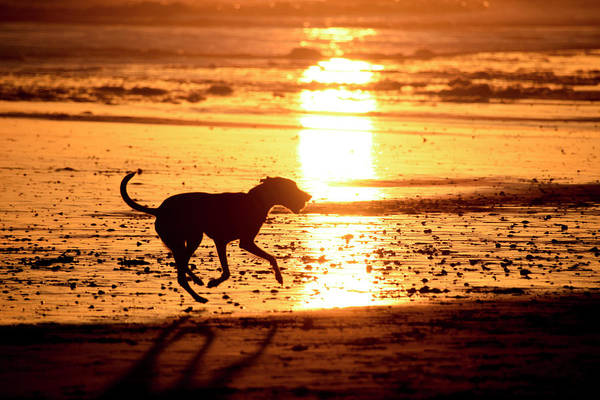 Silhoutte Photograph - Doh At Sunset In  Silhouette by Michael Crawford-hick / Vw Pics