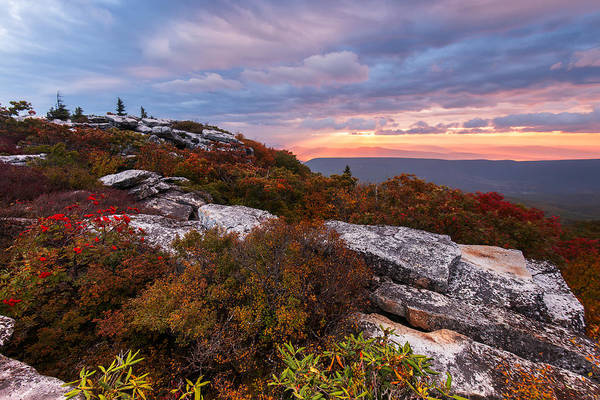 Allegheny Mountains Wall Art - Photograph - Dolly Sods October Sunrise by Joseph Rossbach
