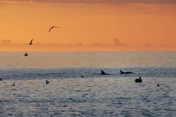 Matador Photograph - Dolphin At Malibu Beach by Mgs
