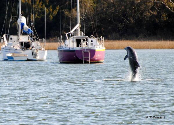 Dolphin In Taylors Creek Art Print