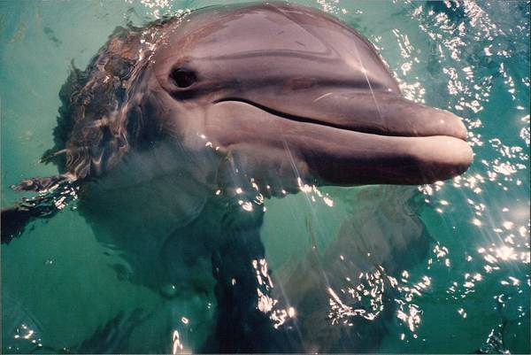 Bahamas Digital Art - Dolphin In The Sunshine by Bonita Hensley