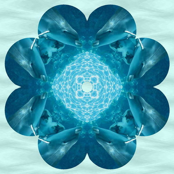 Photograph - Dolphin Kaleidoscope by Natalie Rotman Cote