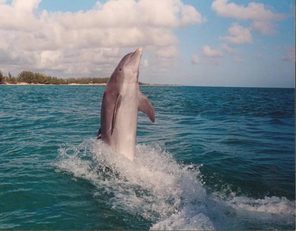 Bahamas Digital Art - Dolphin Moon Walk by Bonita Hensley
