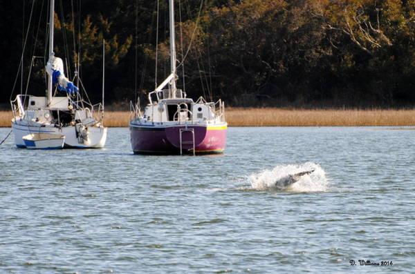 Photograph - Dolphin Splash by Dan Williams