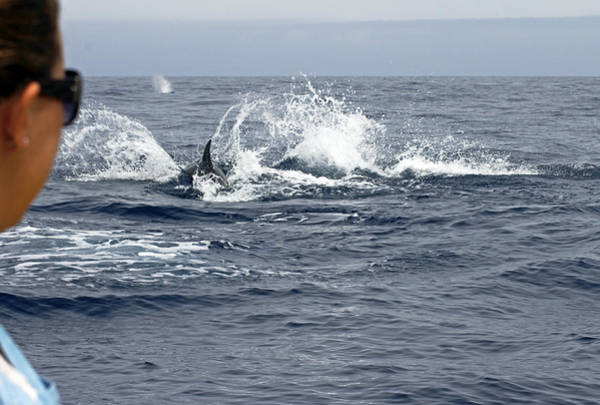 Photograph - Dolphin Watching  by Tony Murtagh