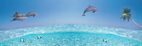 Fish Eye Lens Photograph - Dolphins Leaping In Air by Panoramic Images