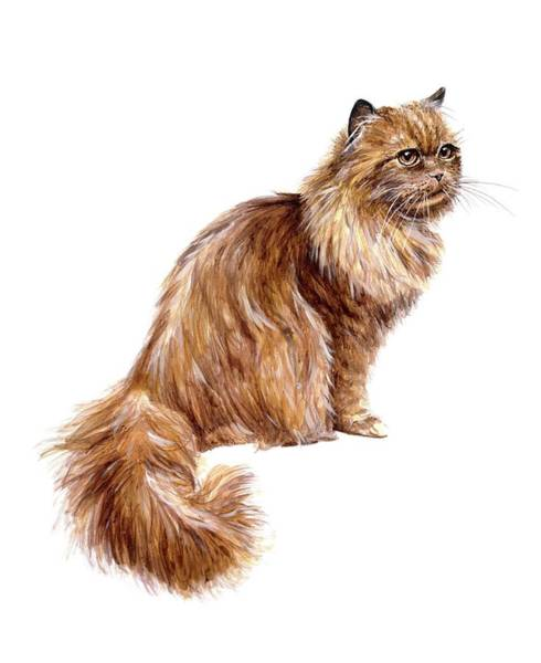 Long Tail Photograph - Domestic Cat by Michael Long/science Photo Library