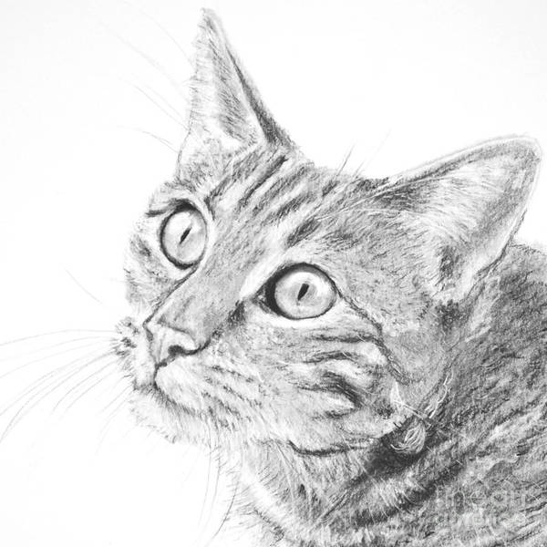 Art Print featuring the drawing Domestic Cat Portrait by Kate Sumners