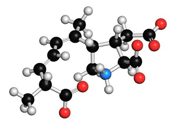 Asps Photograph - Domoic Acid Molecule by Molekuul/science Photo Library