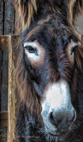 Wall Art - Photograph - Donkey Face by Keith Hutchings