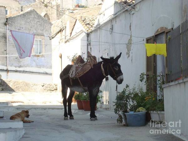 The Belvedere Photograph - Donkey by Archangelus Gallery