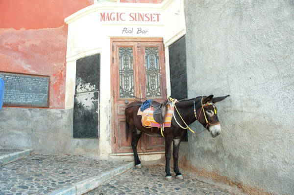 Working Animals Photograph - Donkey Standing On A Street, Fira by Animal Images