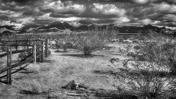 Photograph - Dont Fence Me In Bw by Wayne Wood