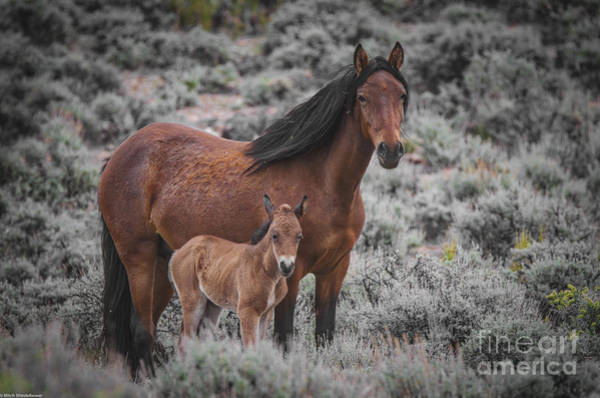 Mare And Foal Photograph - Don't Fence Me In by Mitch Shindelbower