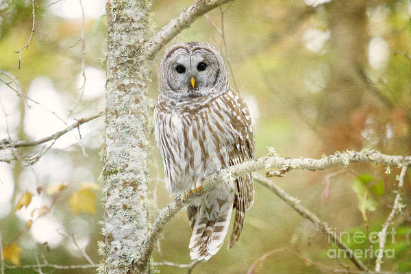 Photograph - Don't Give A Hoot by Beve Brown-Clark Photography
