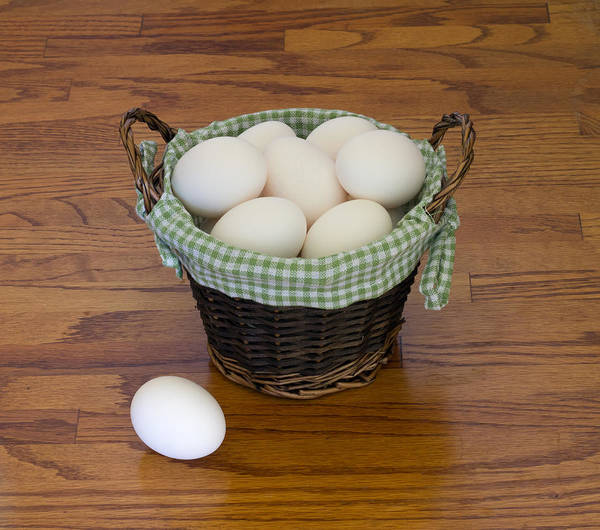 Photograph - Don't Put All Your Eggs In One Basket by Kim Hojnacki