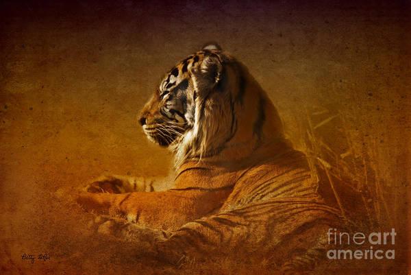 Wall Art - Photograph - Don't Wake A Sleeping Tiger by Betty LaRue