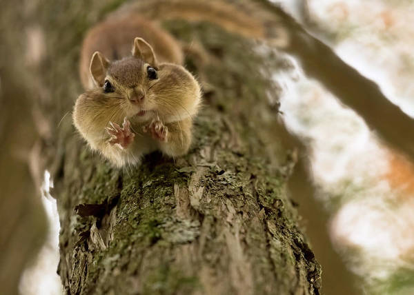 Wall Art - Photograph - Don't You Even Try To Grab My Nuts! by Lucie Gagnon