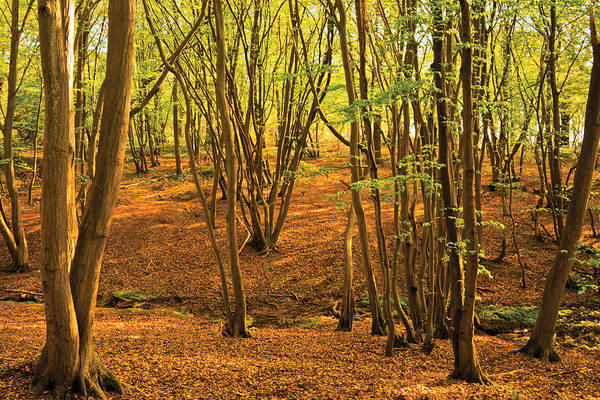 Photograph - Donyland Woods by David Davies