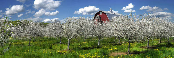 Painting - Door County Cherry Blossoms Panorama by Christopher Arndt