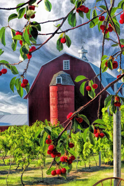 Painting - Door County Cherry Harvest Red Barn by Christopher Arndt