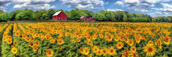 Painting - Door County Field Of Sunflowers Panorama by Christopher Arndt