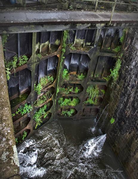 Wall Art - Photograph - Door Greens by Keith Hutchings