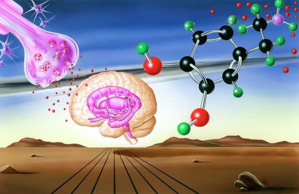 Neurotransmitter Wall Art - Photograph - Dopamine Brain Chemistry by John Bavosi
