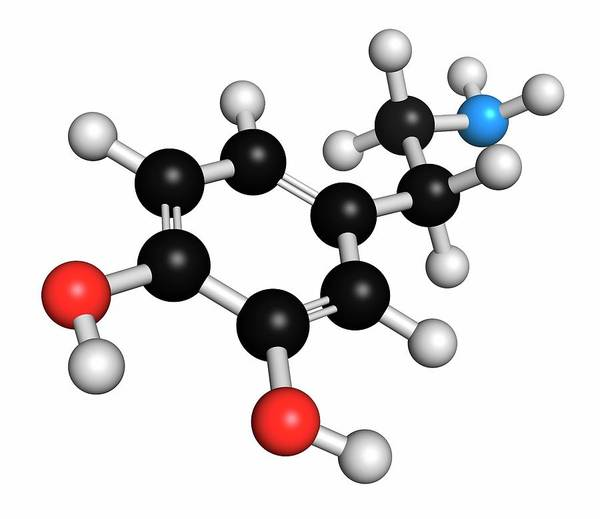 Neurotransmitter Wall Art - Photograph - Dopamine Neurotransmitter Molecule by Molekuul/science Photo Library