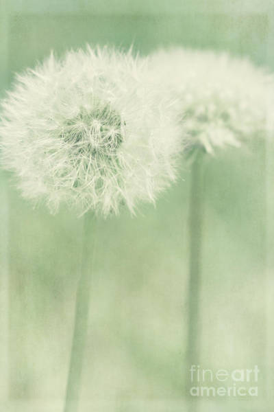 Photograph - Double Dandy by Pam  Holdsworth