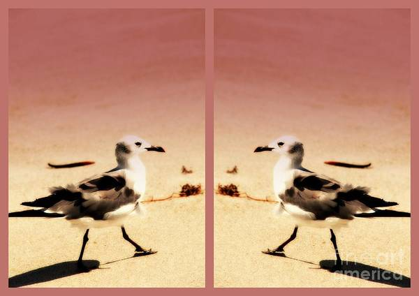 Photograph - Double Gulls Collage by Susanne Van Hulst
