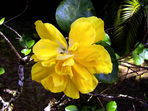 Photograph - Double Hibiscus Costa Rica by Kurt Van Wagner