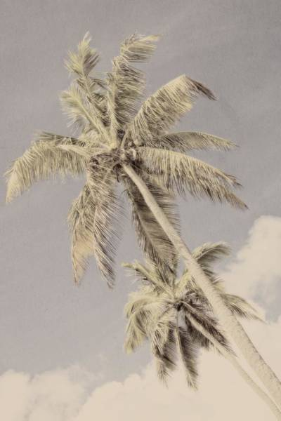 Photograph - Double Palms by Alice Gipson