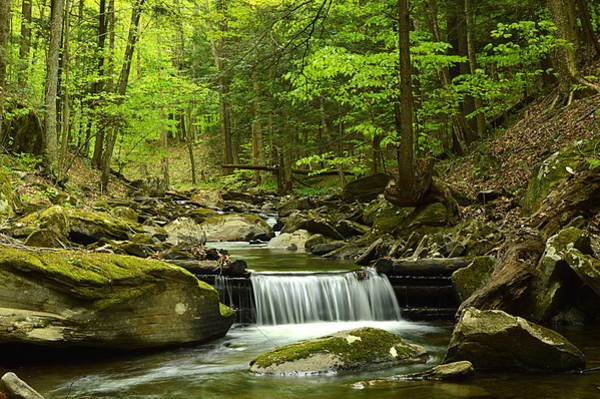 Sullivan County Photograph - Double Run #1 - Worlds End State Park by Joel E Blyler