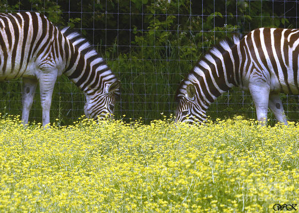 Photograph - Double Stripes by Wanda Krack